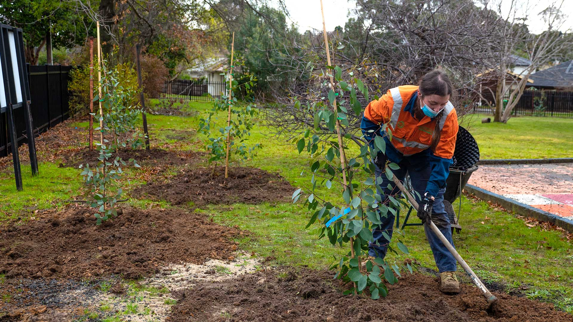 A gardener wearing protective clothing filling soil around a mature gum tree planted at Watsonia Primary School.